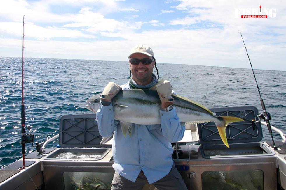 averagekingfish1